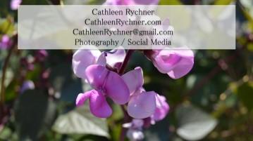 CathleenRychnerAd