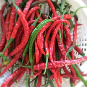 Cayenne peppers Rejoice farms