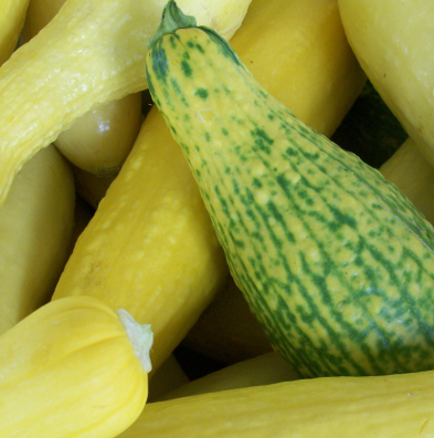 CommunityGardenSquash